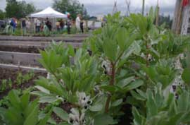 Community Gardens in Campbell River